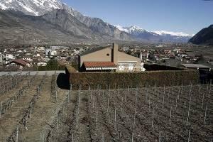 Dans un cadre de vignes