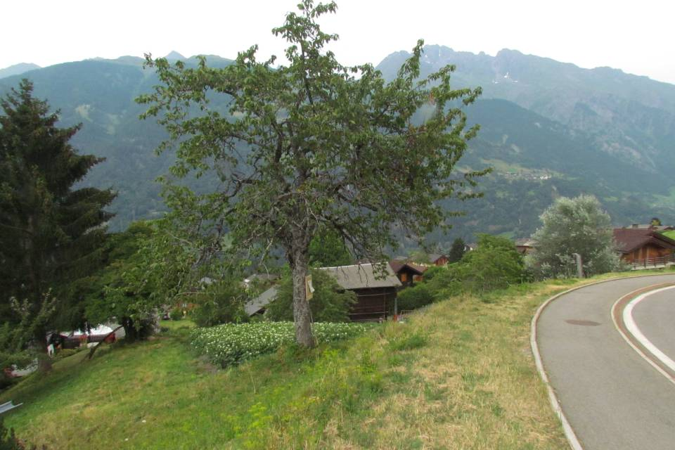 Terrain à Bruson