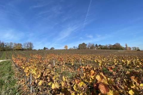 GROUND FLOOR opening onto the vines